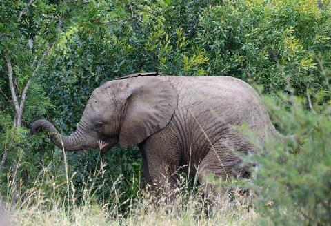 baby elephant south africa