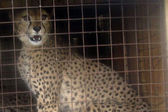 cheetah-airport-10241-25092.jpg