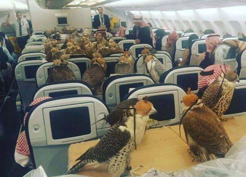 falcons on flight