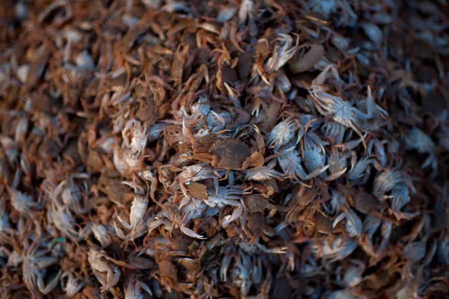 a big haul of crabs