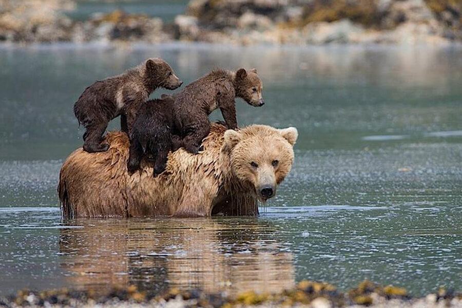 bear-cub-rescue-story-01