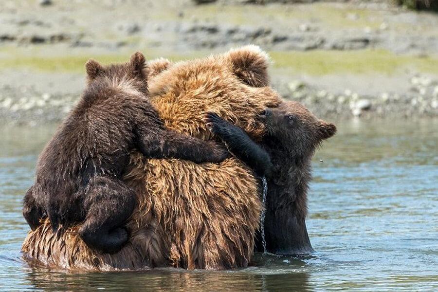 bear-cub-rescue-story-05