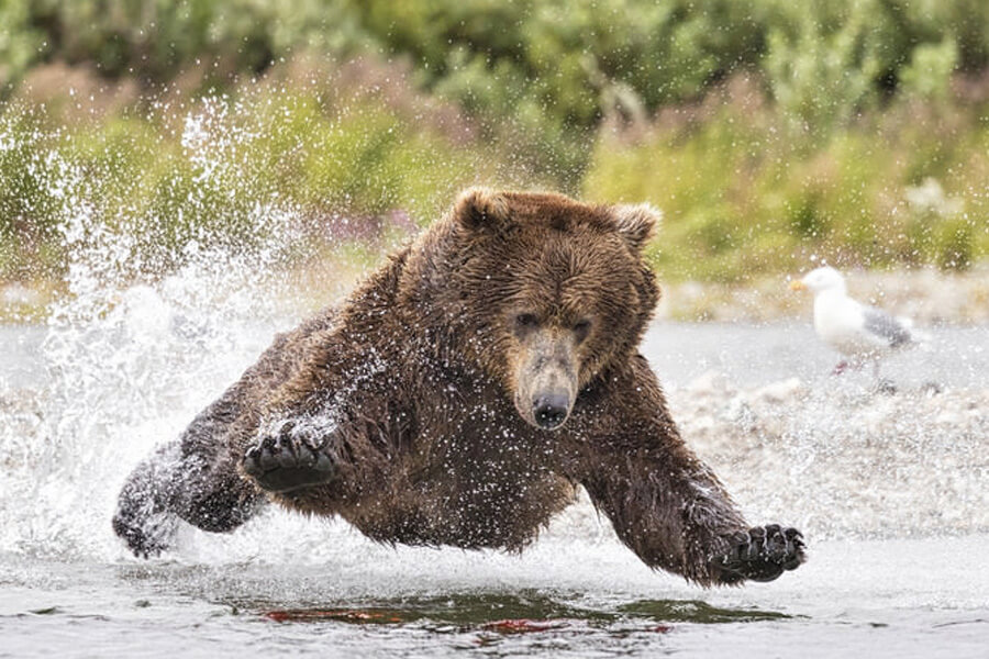 bear-cub-rescue-story-06