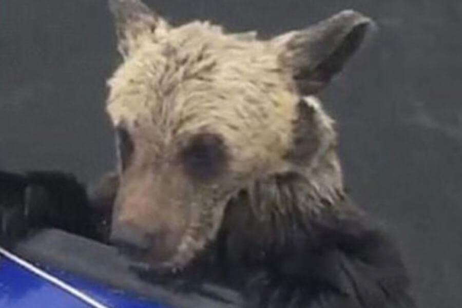 bear-cub-rescue-story-16