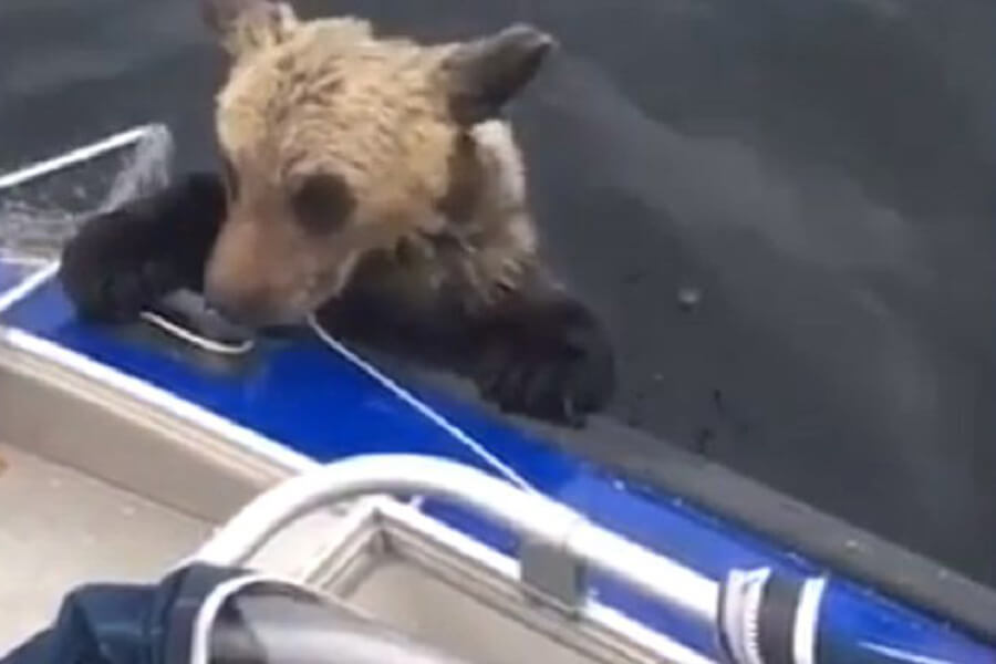 bear-cub-rescue-story-19