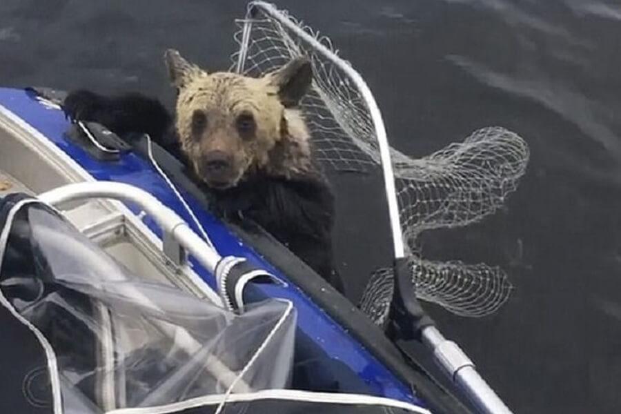 bear-cub-rescue-story-24