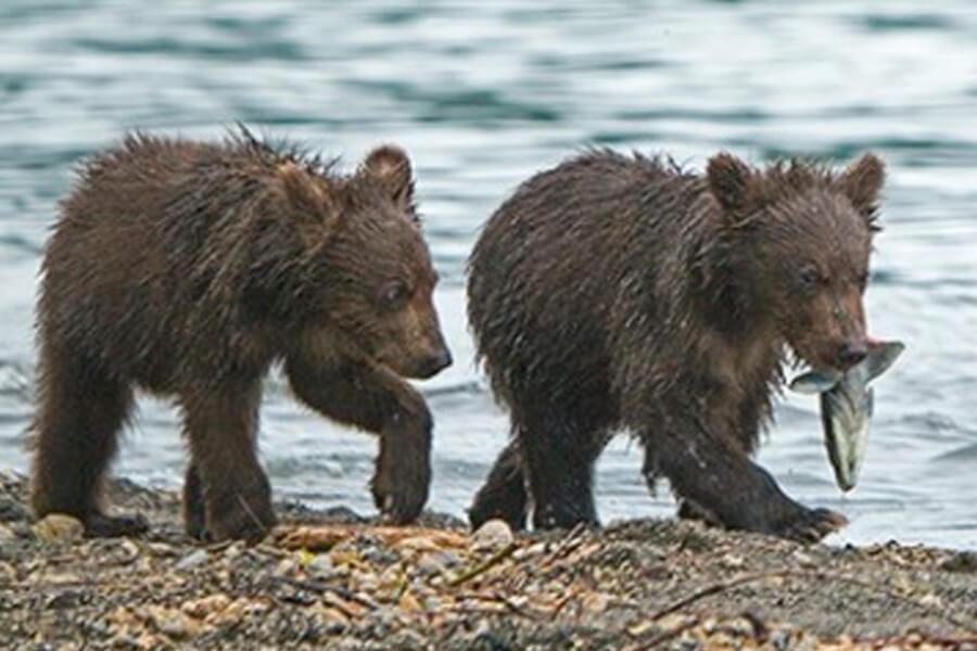 bear-cub-rescue-story-34