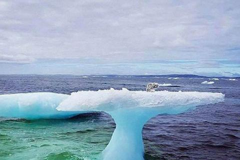 fisherman find mystery on iceberg