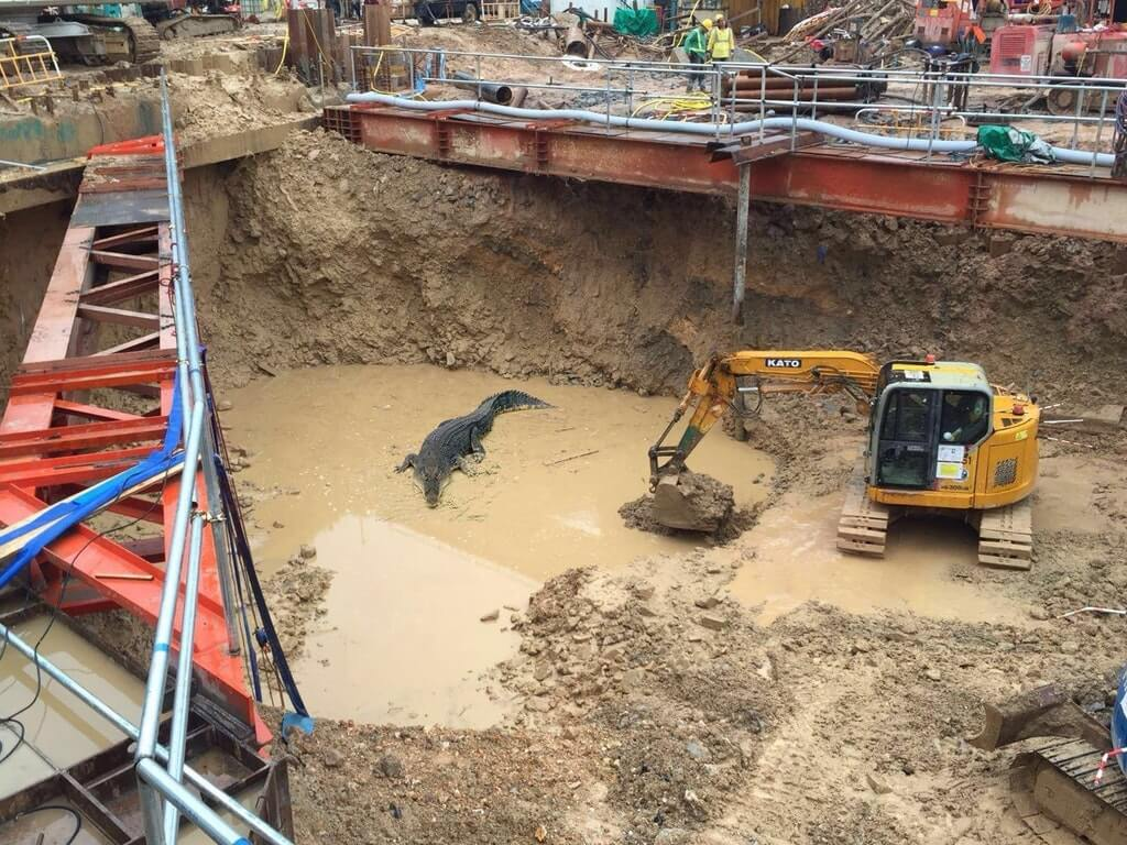 crocodile-constuction-pit-40138