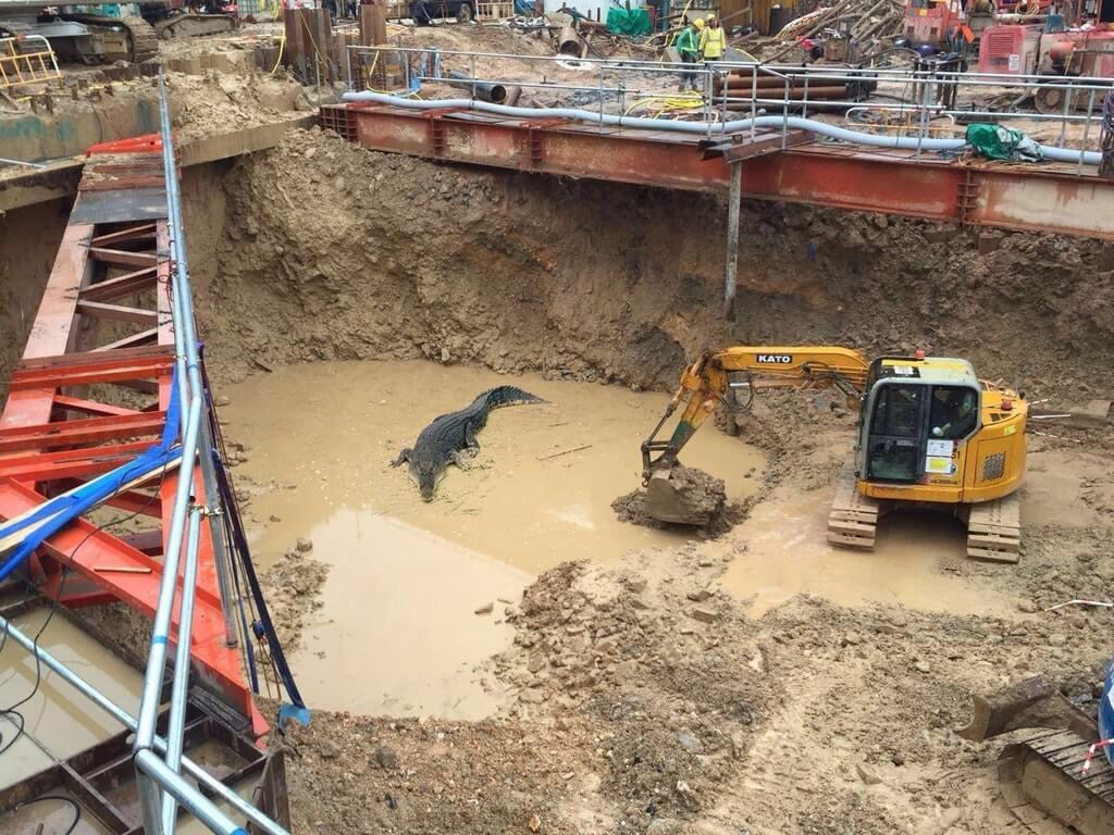 crocodile-constuction-pit-40138