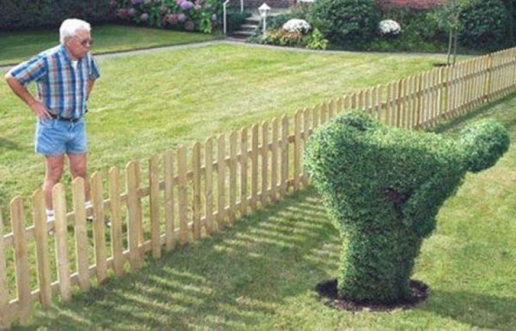 hedge-art