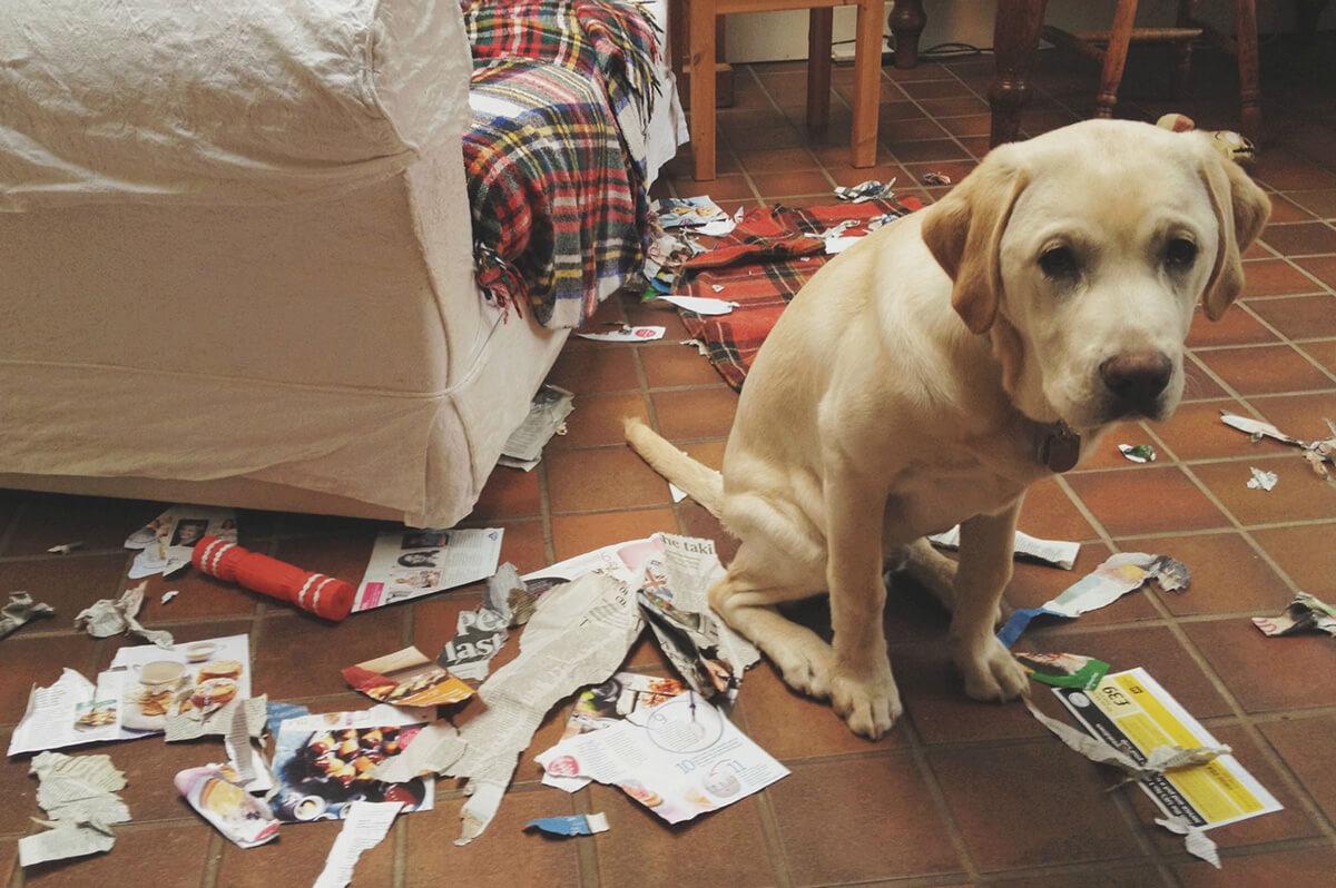 guilty-dog-01-56544.jpg