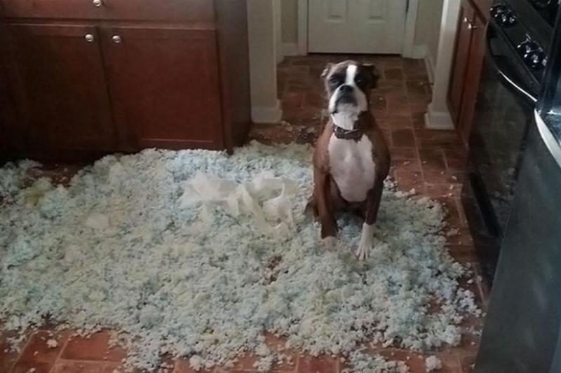guilty-dog-10-89726.jpg