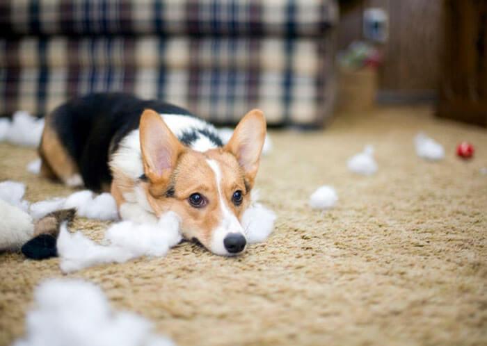 guilty-dog-14-98300.jpg