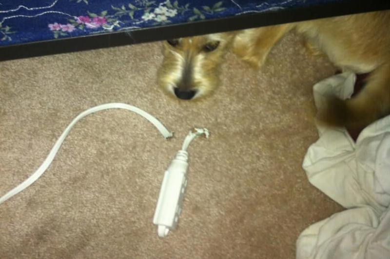 guilty-dog-18-45863.jpeg