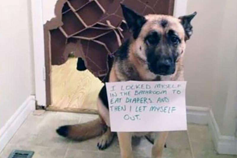 guilty-dog-repair-63871.jpg