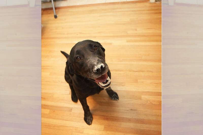 guilty-dogs-45-75710.jpg