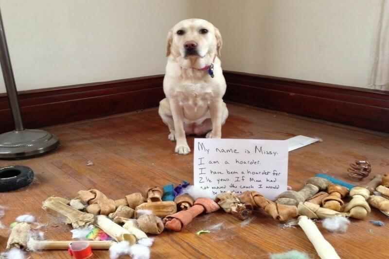 guilty-dogs-48-92977.jpg