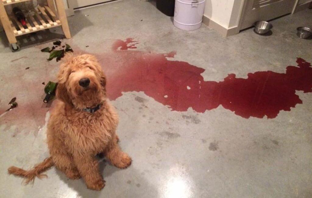 guilty-dogs-wine-22014.jpg