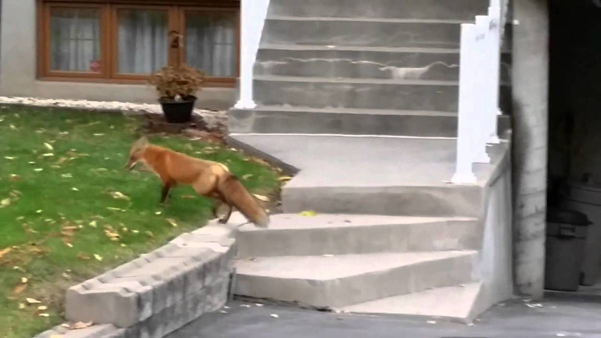 fox-neighborhood