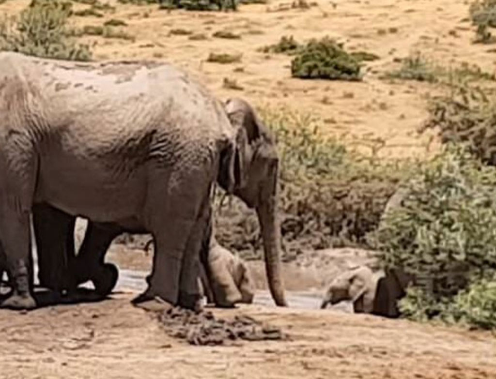 herd-helos-stuck-baby-elephant-77891