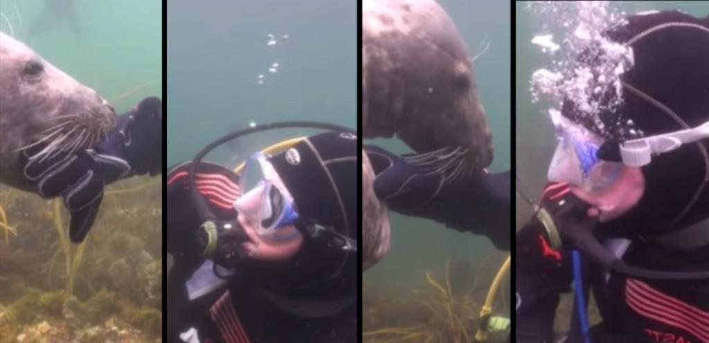 scuba-seal-encounter-close up bite