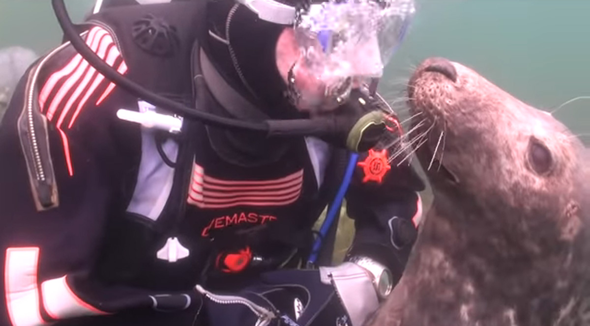 scuba-seal-encounter-10-seal smile