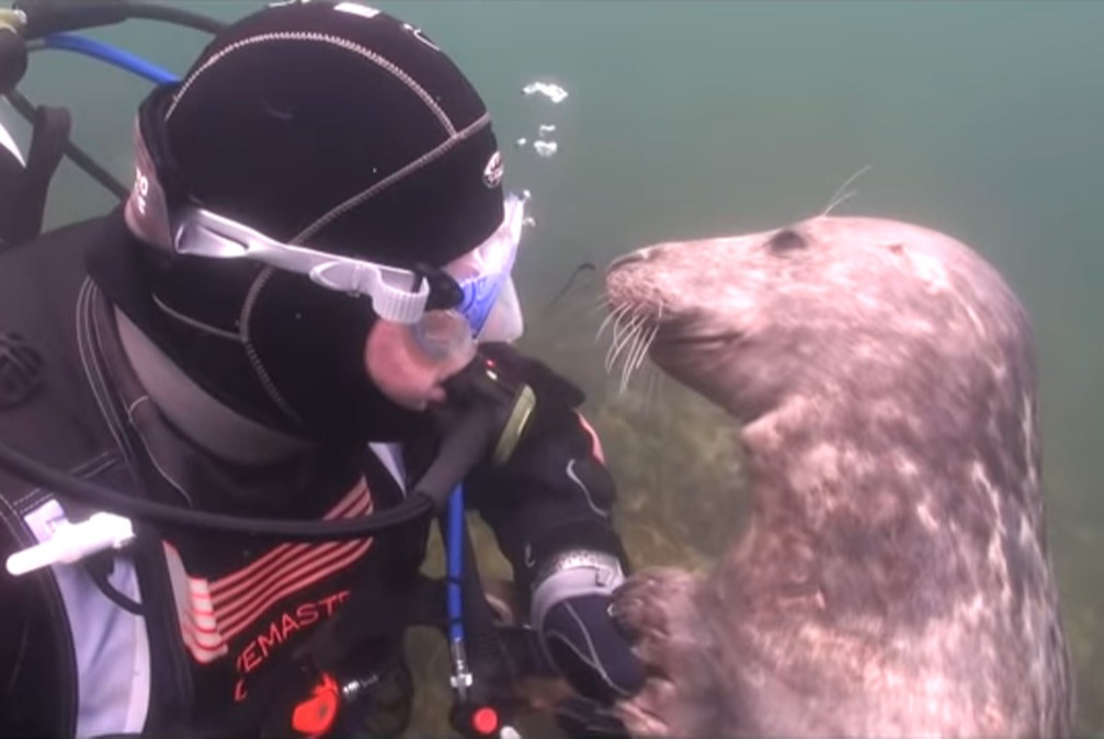 scuba-seal-encounter-12-seal smile UNDERWATER
