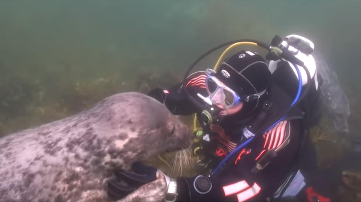 scuba-seal-encounter-13-seal face close up underwater