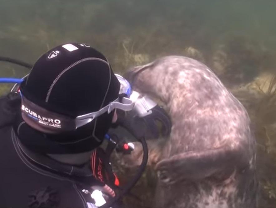 scuba-seal-encounter-14-seal  up close