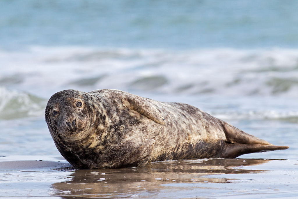 scuba-seal-encounter-17-seal beach side