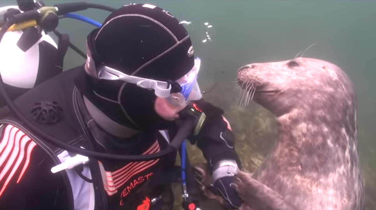 scuba-seal-encounter-18-seal smile underwater