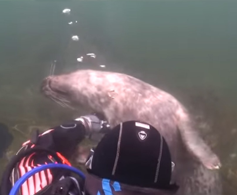 scuba-seal-encounter-19-seal upsidedown smile