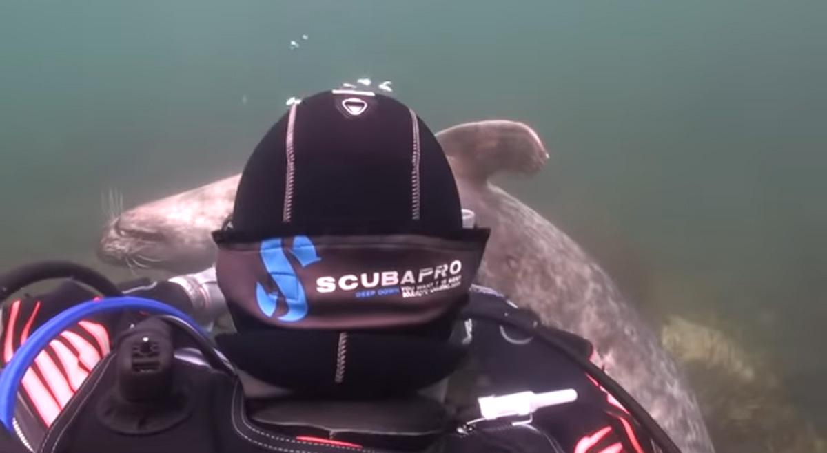 scuba-seal-encounter-20-scubapro seal