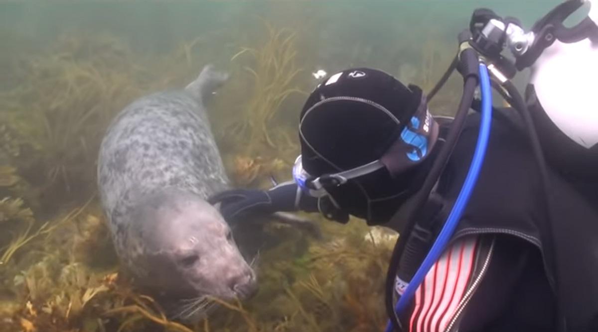 scuba-seal-encounter-21-petting seal