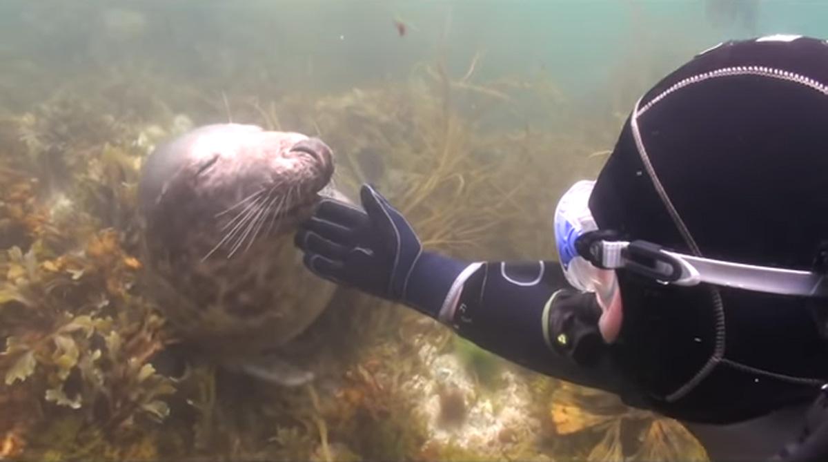 scuba-seal-encounter-24-seal chin scratch