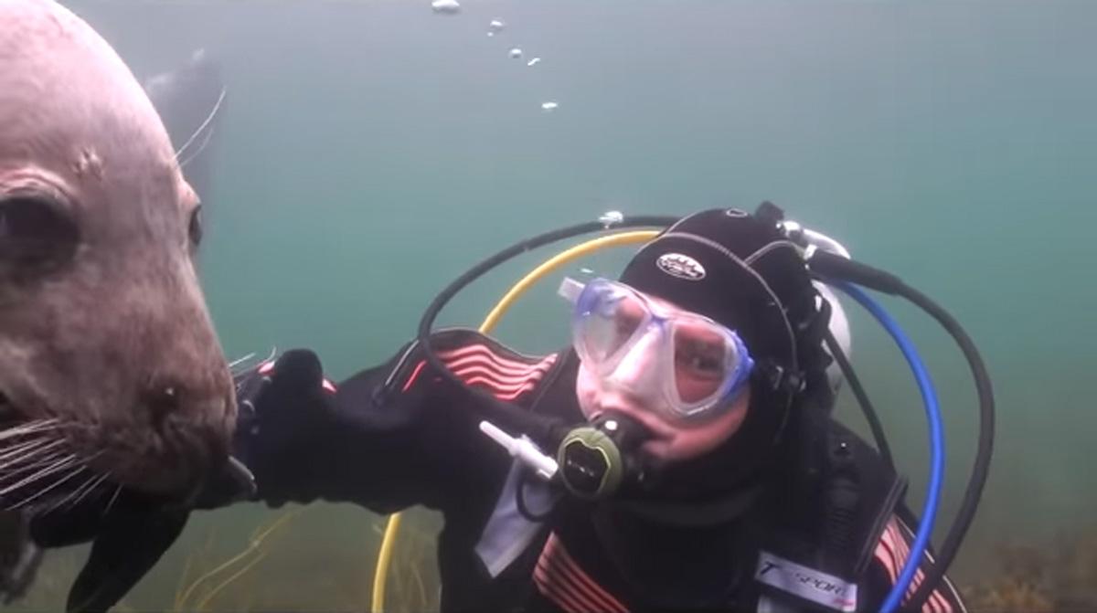 scuba-seal-encounter-25-scuba diver seal