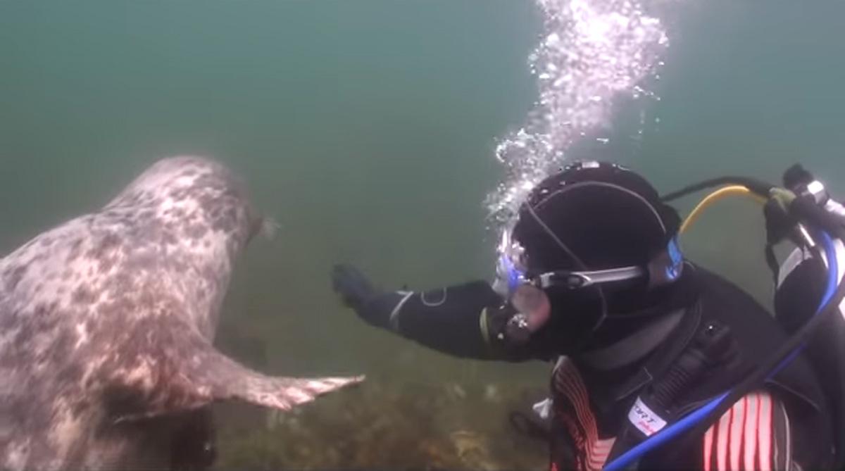 scuba-seal-encounter-26-seal wave fin
