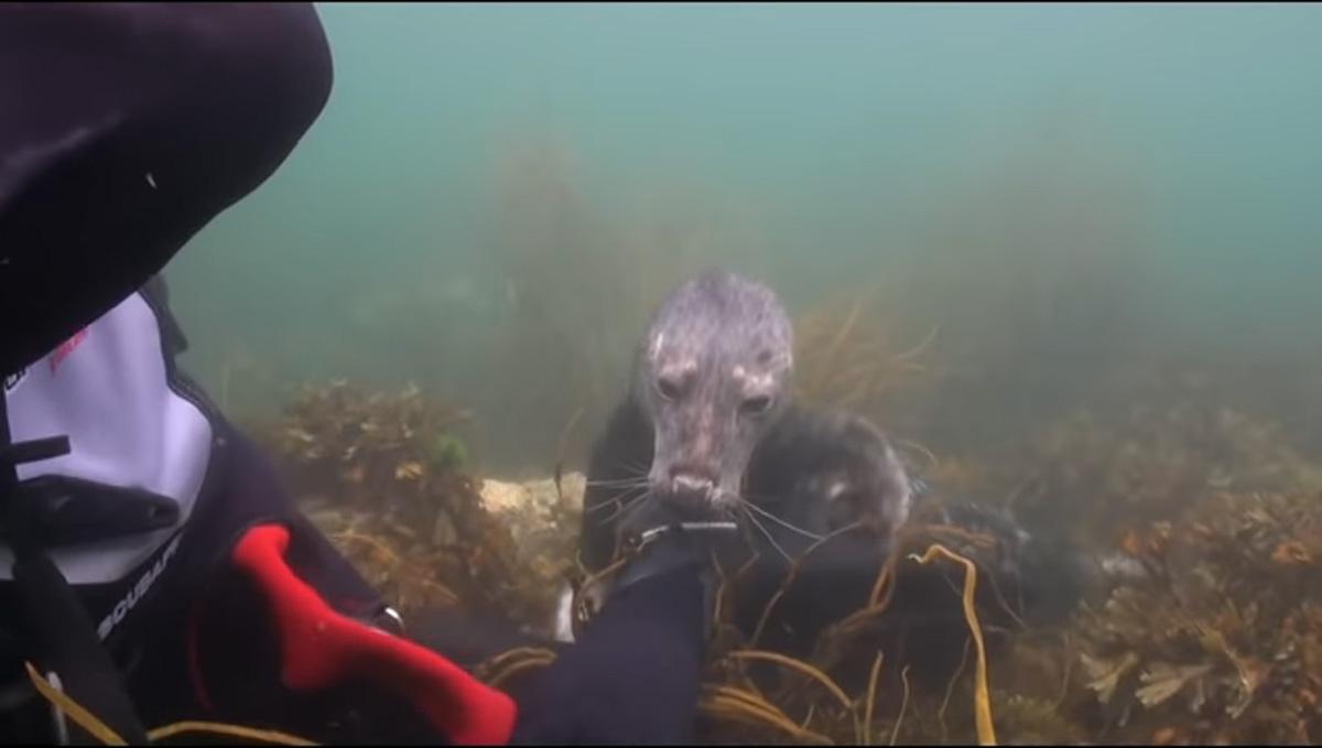 scuba-seal-encounter-28-seal underwater