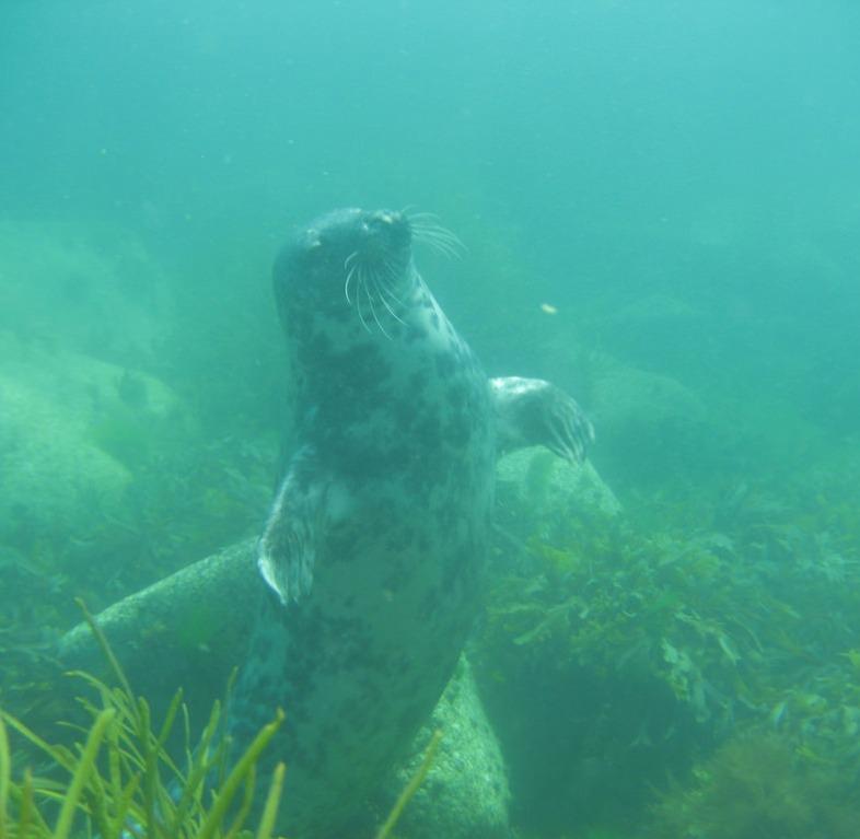 scuba-seal-encounter-underwater pose