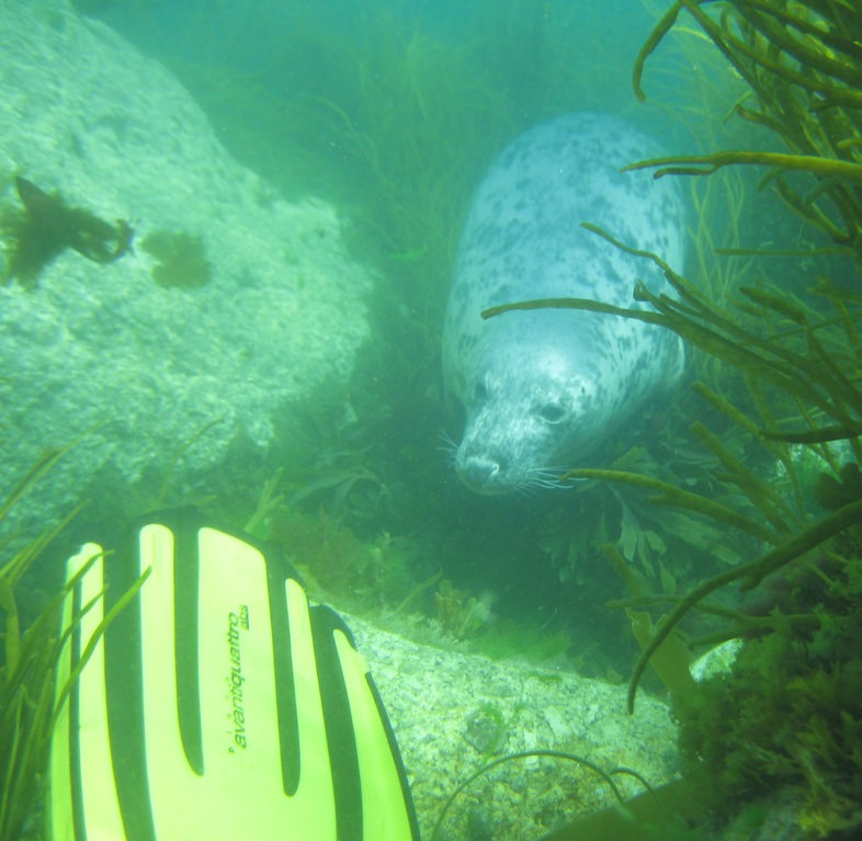scuba-seal-encounter-underwater creeping up