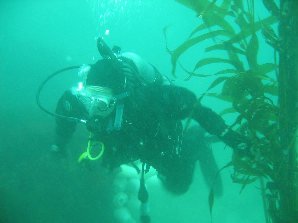 scuba-seal-encounter-6-scuba diver underwater