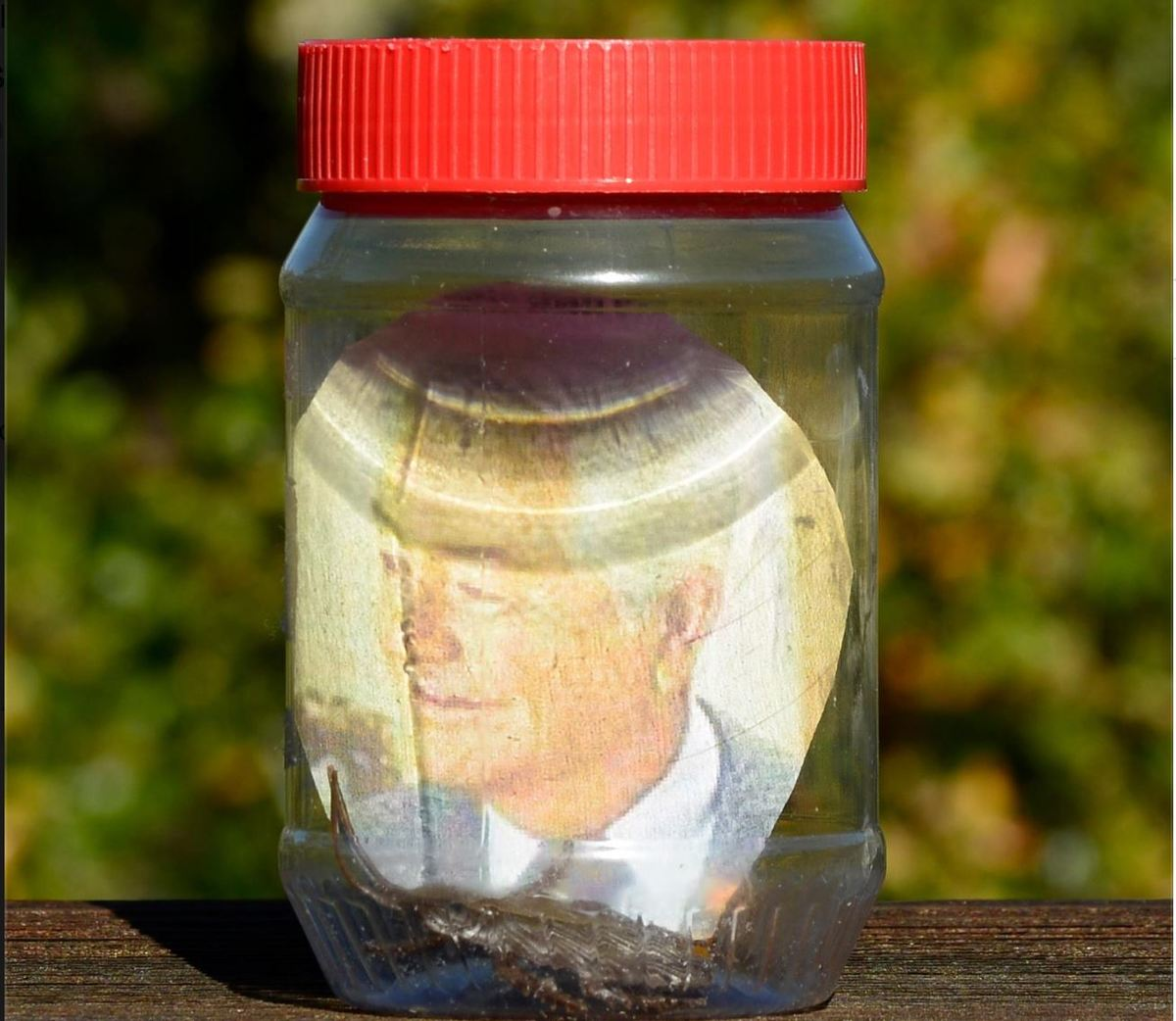 the five friends' jar with a photo and a cockroach