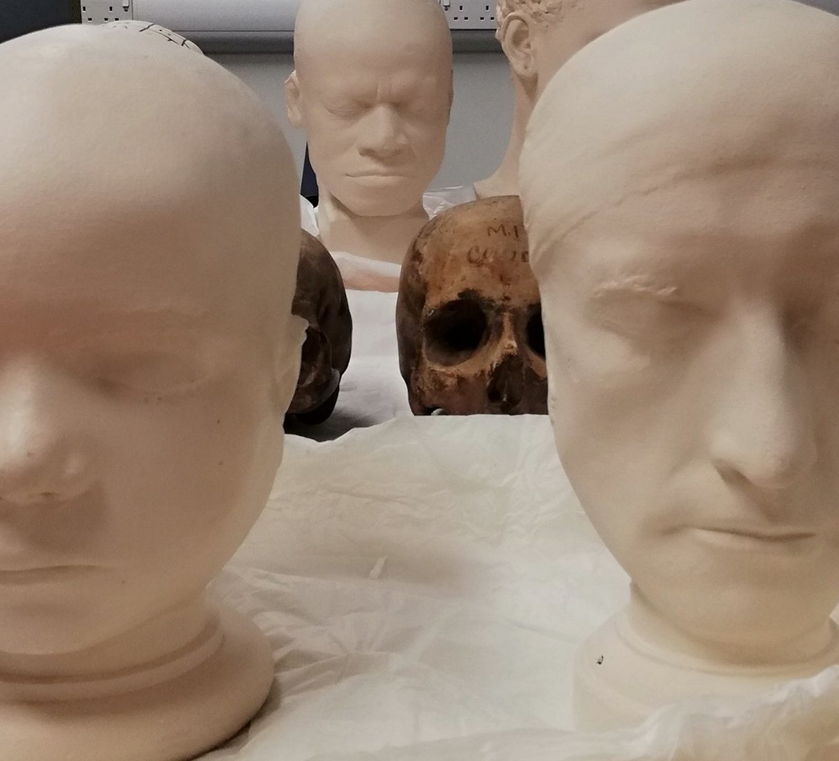 Skulls and casts at the museum
