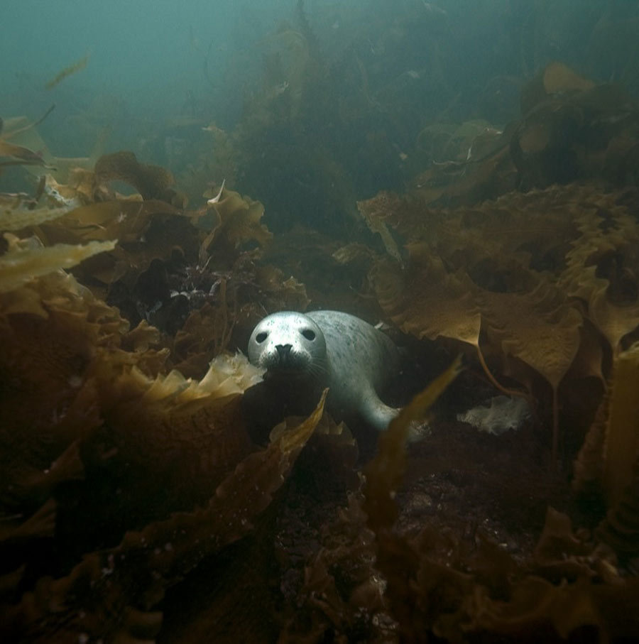scuba-seal-encounter-15-80405-50531