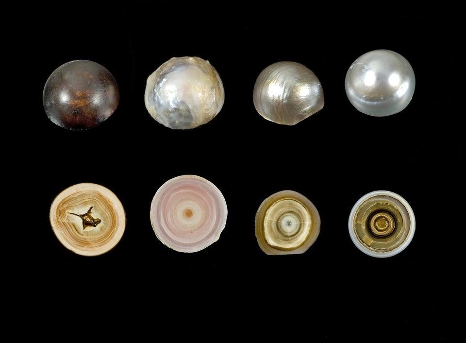 pearls cut in half