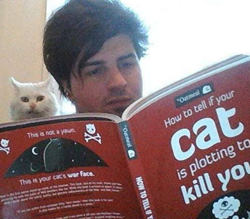 book about cat