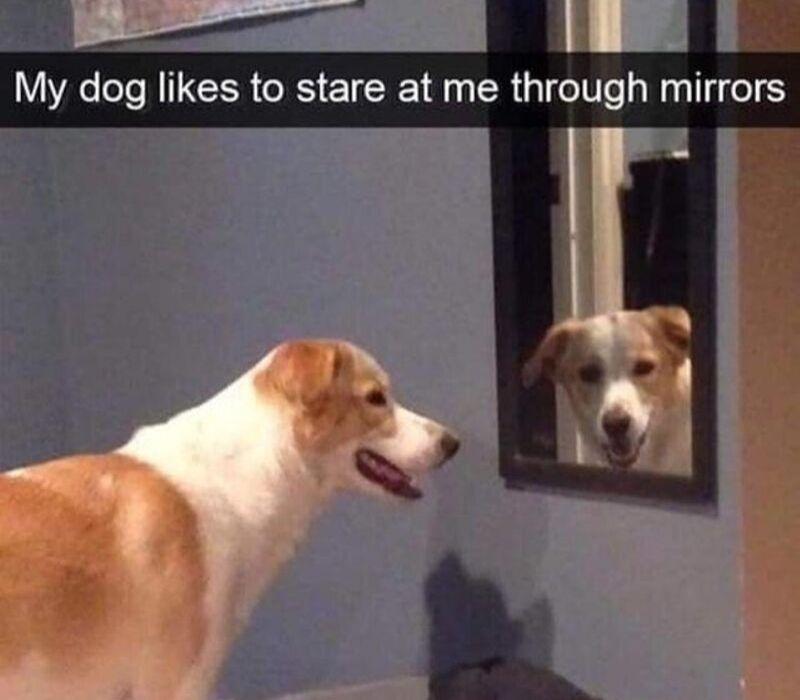 dog mirrors