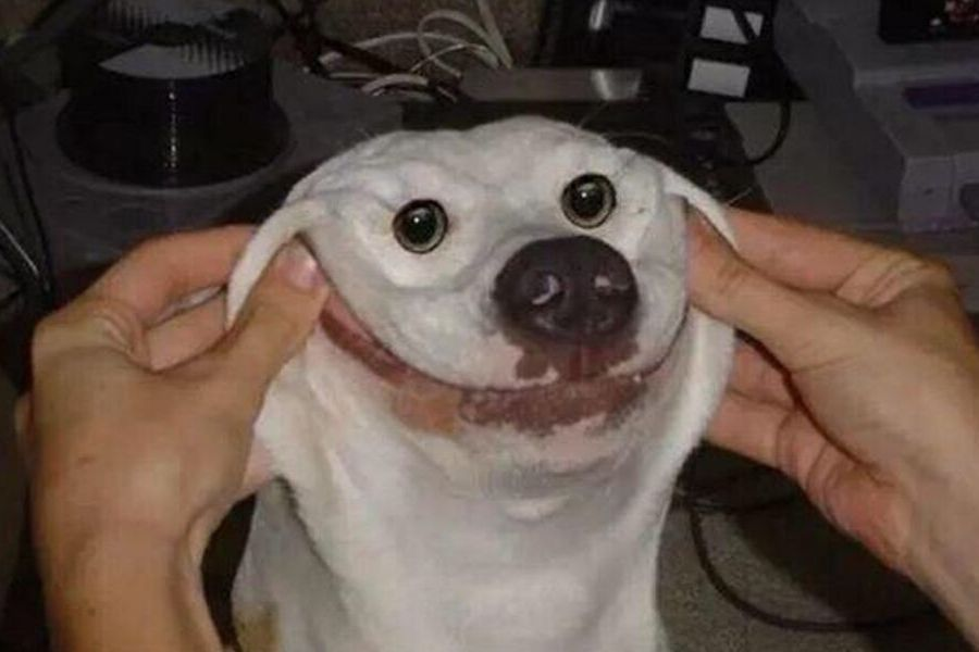 dog smiley