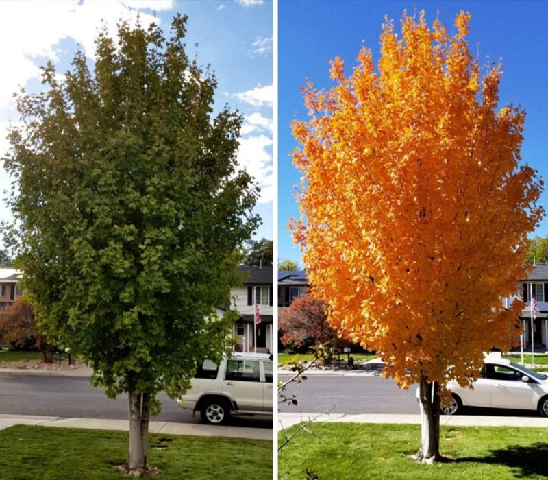 tree changing color in the seasons